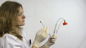 Young biologist research poppy by height in flask in lab room stock footage