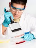Young biologist sets up reaction. Young biologist sets PCR reaction with multichannel pipette Stock Images