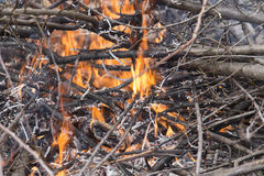 Young birch branch in fire Royalty Free Stock Photo