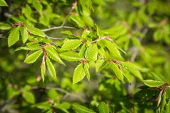 Green natural texture. Close up. royalty free stock photography