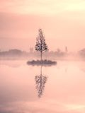 Young birch tree on island in middle of swamp lake. Purple morning  with peaceful water Royalty Free Stock Image