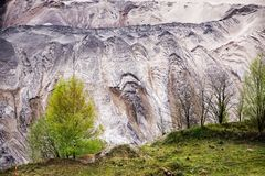 Young birch trees on the edge of the pit from lignite brown coa Royalty Free Stock Images