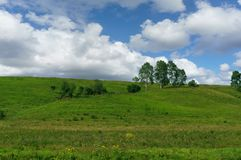 Birches growing on a green hill Stock Photo
