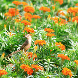 Young Bird In Garden Royalty Free Stock Image