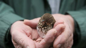 Young bird recovering