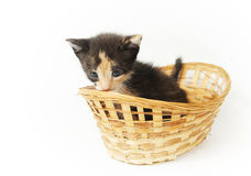 Young bitty funny kitten in the wicker basket Stock Photo