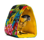Young Black-capped Parrot (10 weeks old) standing in a bag Royalty Free Stock Image