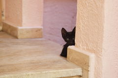 Young black cat Stock Images