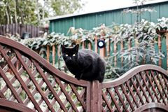 Black cat on the fence. Young black cat on the fence in green garden. Outdoor animal concept Royalty Free Stock Photo