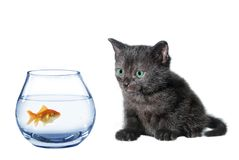 Young black cat and fish Stock Image