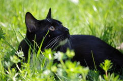 Young black cat Stock Photo