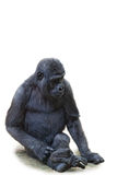 Young black gorilla Stock Photography