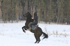 Young black haired woman on top a bay horse in winter forest. Telephoto Stock Photo