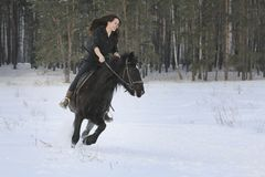 Young black haired woman on top a bay horse in winter forest. Telephoto Royalty Free Stock Photos