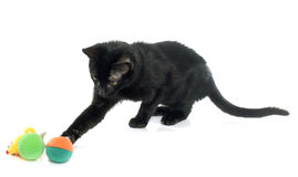 Young black kitten Royalty Free Stock Photography