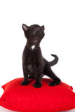 Young black kitten posing Stock Photo