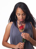 Young black woman looking down at red rose. Young black woman holding red rose Royalty Free Stock Photo