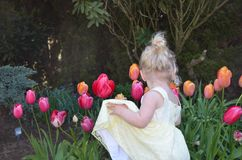 Young blond girl looking at tulips Stock Image