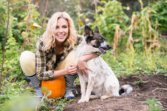 Young blond woman with dog harvesting pumpkins, autumn garden. Stock Photography