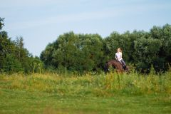 Young blond woman with long hair jockey rider jumping on a bay horse. On a background of field and forest royalty free stock images