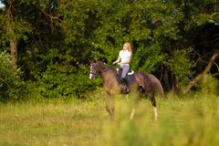 Young blond woman with long hair jockey rider jumping on a bay horse. On a background of field and forest stock image