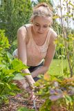 Young blond woman is working with a rake in the garden stock photography
