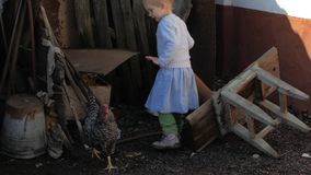 Young blonde girl chasing chickens outside.  stock video footage