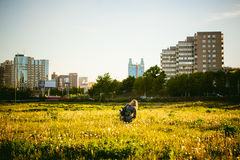 Young blonde girl in dress with shoulder bag, walking on dandelion field royalty free stock images