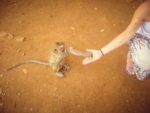 A young blonde girl feeds a monkey in Thailand. Tourism stock photo