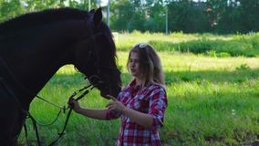 Young blonde woman in a plaid shirt takes a walk with his horse. A woman is training a horse. Summer sunny evening stock video