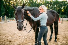 Woman take caring for the hair of brown horse. Young blonde woman take caring for the hair of brown horse. Equestrian sport, attractive lady and beautiful Royalty Free Stock Photos