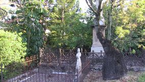 A young Boabab tree in an old overgrown cemetery. This cemetery was the first official cemetery in the city of Brisbane Australia, with the first grave dating to stock footage