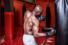 Young Bodybuilder boxing a bag Stock Image