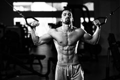 Young Bodybuilder Exercising Biceps On Cable Machine Royalty Free Stock Images