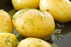Young boiled potatoes Royalty Free Stock Image
