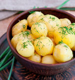 Young boiled potatoes Stock Photography