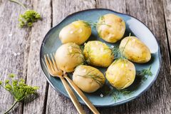 Young boiled potatoes with dill and olive oil Royalty Free Stock Photography