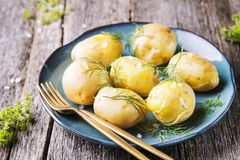 Young boiled potatoes with dill and olive oil Stock Images
