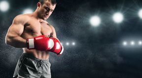 Young box sportsman concentrating with closed eyes. Power of thought. Young box sportsman concentrating before fight, ring lights background, copy space royalty free stock photography