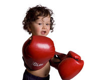 The young boxer. Stock Images