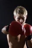 Young boxer Stock Photos