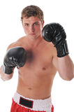 Young boxer Stock Images