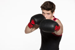 Young boxer Stock Photography