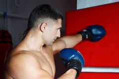 The young boxer in gloves Stock Photo