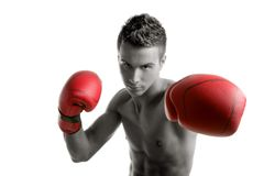 Young boxer man isolated on studio Stock Photos