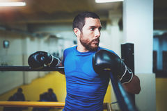 Young boxer man relaxing on boxing ring before fight in a fitness club.Caucasian male in black gloves. Muscular strong Royalty Free Stock Photos
