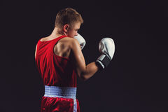 Young boxer in red form Stock Images