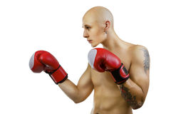 Young  boxer on white, studio. Young handsome bald boxer man on white, studio Stock Photo