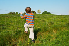 Young boy. In the countryside on a sunny day Stock Images