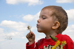 Young boy royalty free stock images